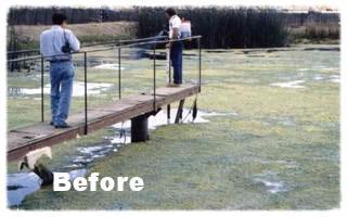 F 30 Algae Control Treatments Lakes Water Garden