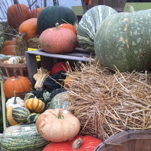 Corn Stalks, Pumpkins, & More