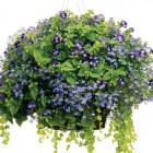 Shade Hanging Baskets